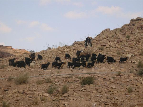 Бедуины живут в Петре своей жизнью... / Фото из Иоpдании