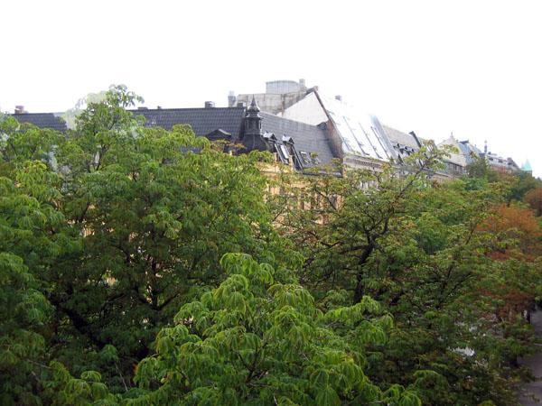 Крыши, утопающие в зелени / Фото из Норвегии