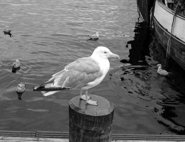 Акер-Бриге. Чайка / Фото из Норвегии
