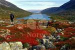 Сага о прекрасном севере