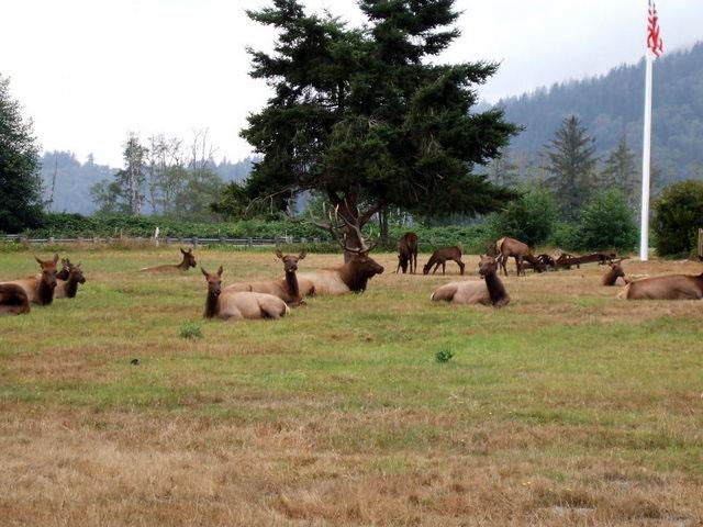 Природный парк между Юрикой и Кресент-Сити / Фото из США