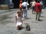 обезьянка и туристка / Малайзия