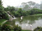 в птичьем парке / Малайзия