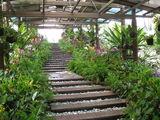 птичий парк / Малайзия