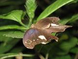 обитатель парка бабочек / Малайзия