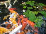 парк бабочек, рыбки в ручейке / Малайзия