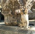 Эфес - царство кошек / Фото из Турции