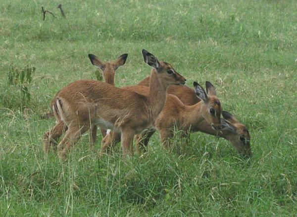 По дороге встречались различные животные / Фото из Кении