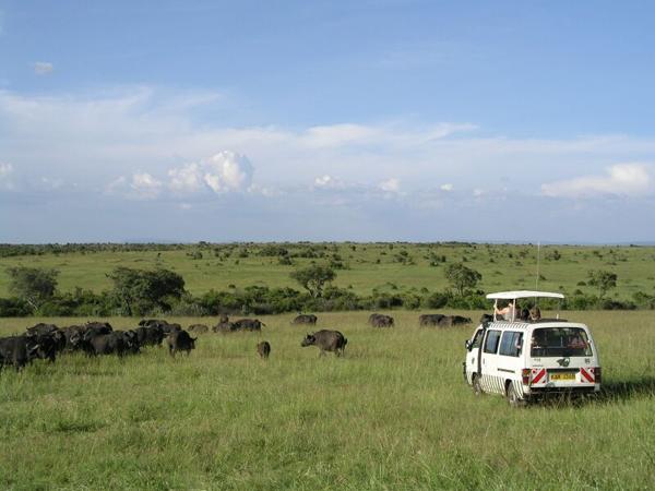Туристов в парке много, и все на таких же машинах с поднятым верхом / Фото из Кении