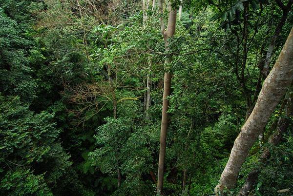 Вид с моста вниз / Фото из Малайзии