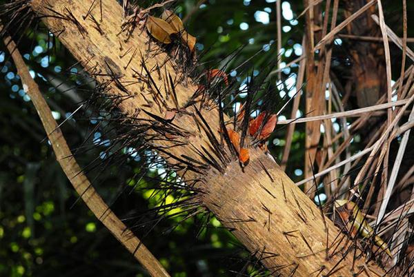 Агрессивность джунглевой растительности просто поражает / Фото из Малайзии