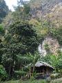 бамбуковая хижина / Таиланд