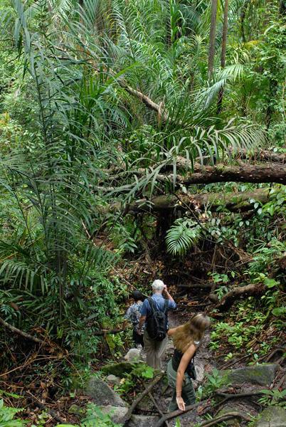 Масштабы растительности радуют взор / Фото из Малайзии