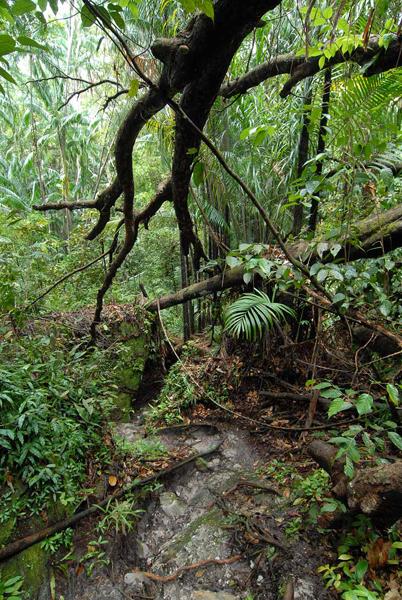 Буйная зелень / Фото из Малайзии