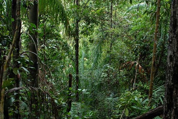Разнообразие растительности / Фото из Малайзии