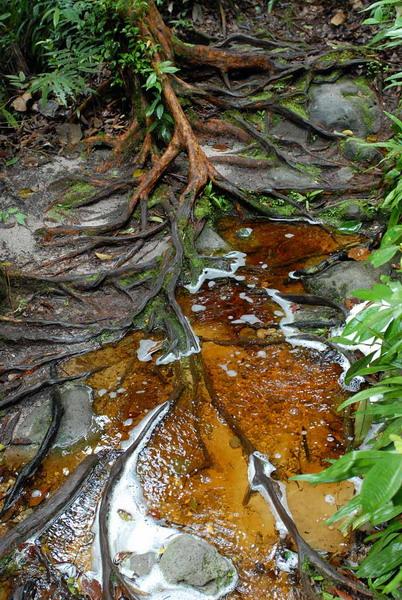 Древесный сок попадает прямо в воду / Фото из Малайзии