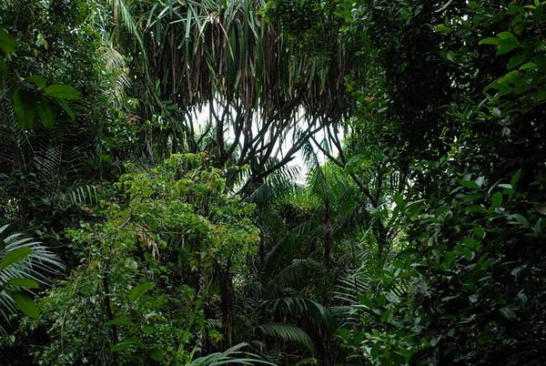 Бесконечная флора джунглей / Фото из Малайзии