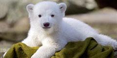 Новосибирцы выбрали имя для маленькой медведицы
