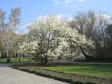 в парке / Чехия