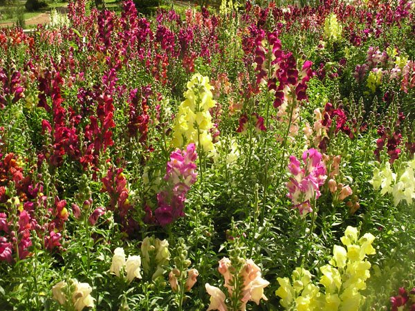 Цветущая клумба в саду Eram / Фото из Ирана