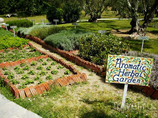 Здесь выращивают пряные травы / Фото из Греции