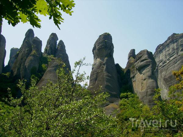 'Каменный' лес / Фото из Греции
