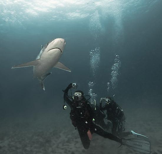 Серебристая акула позирует для фото, точка Silverado, 15 метров / Фото из Коста-Рики