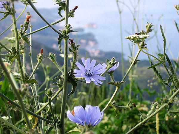 Полевые цветочки / Фото из Черногории