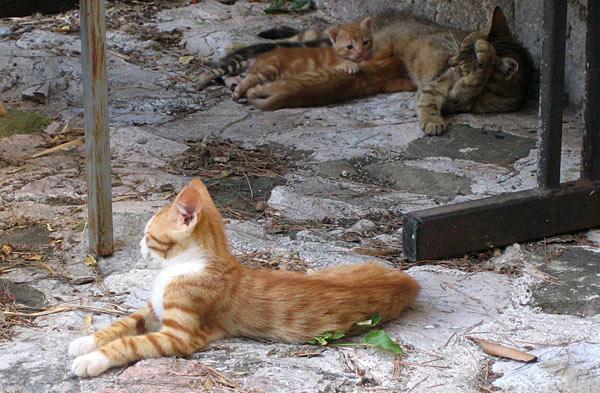 Кошачье семейство / Фото из Черногории