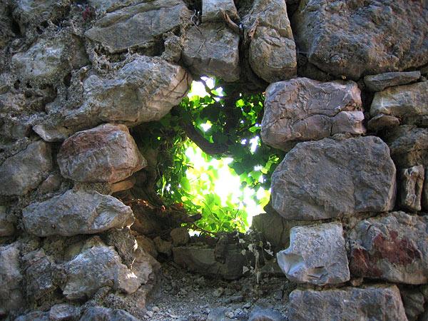 Природа и камни развалин / Фото из Черногории