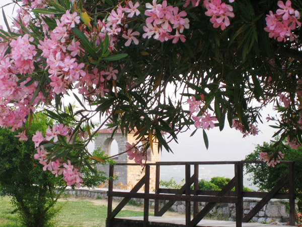 Цветочное великолепие / Фото из Черногории