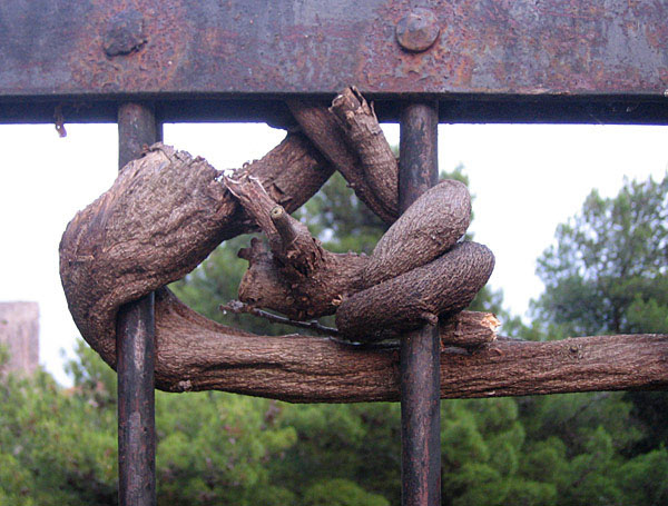 Цепкие древесные пальцы / Фото из Черногории