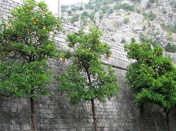 Стена города / Фото из Черногории