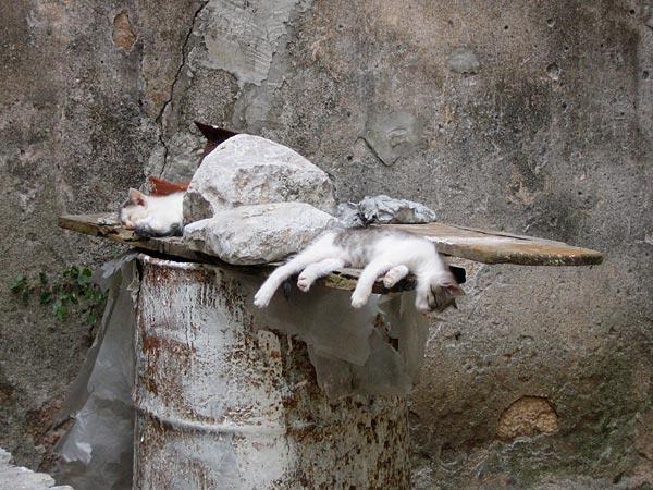 Сонные кошки / Фото из Черногории