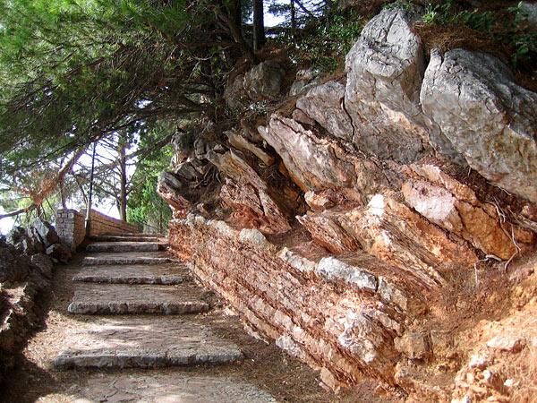 Горные дорожки в тени сосен / Фото из Черногории
