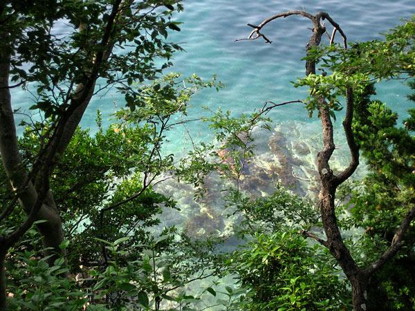 Очень чистое и очень голубое море / Фото из Черногории