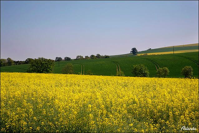 Просторы нормандских полей / Фото из Франции