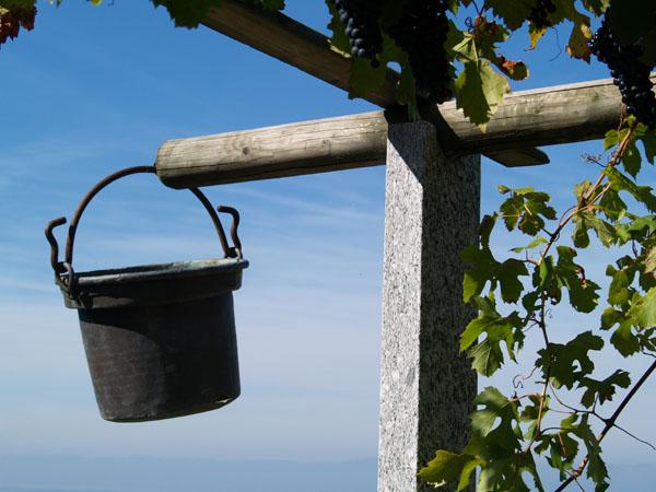 Беседка в винограднике / Фото из Швейцарии