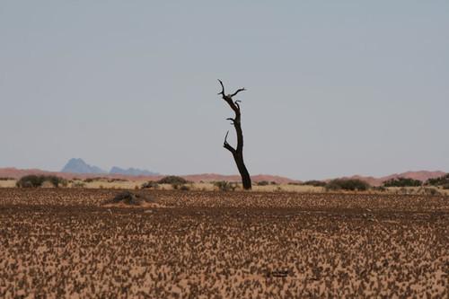 На подъезде к пустыне Намиб - вся растительность вымерла на корню / Намибия