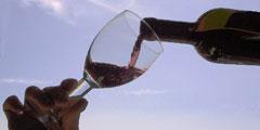Молодое вино можно попробовать в Италии