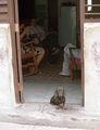 кресло-качалка / Куба