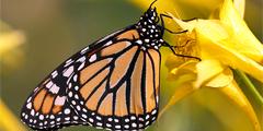 Мексика развивает уникальный природный парк