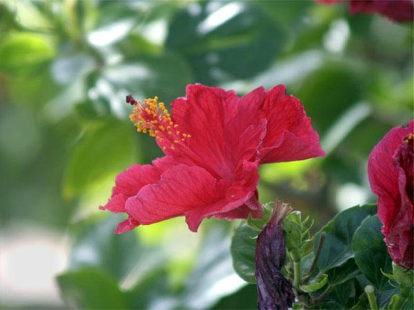 Флора острова Гран-Канария / Фото из Испании