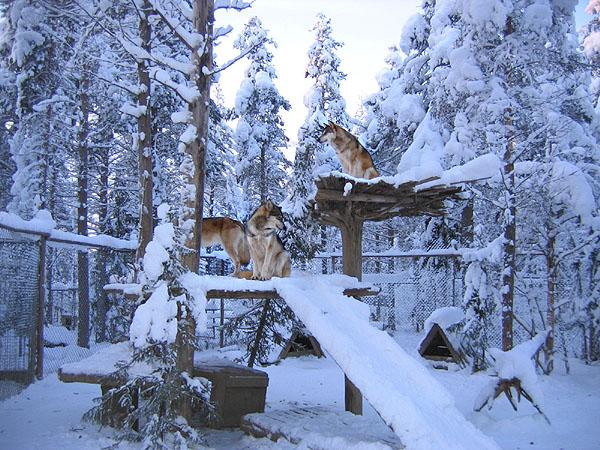 Вот кто здесь хозяин / Фото из Финляндии