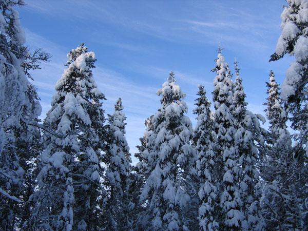 Северная сказка / Фото из Финляндии