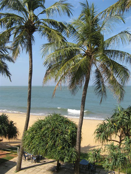 Вид из окна моего номера в Негомбо / Фото со Шри-Ланки