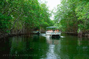 Круиз на катере по Чёрной реке / Ямайка
