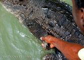 Гид таскает крокодила за лапу / Ямайка