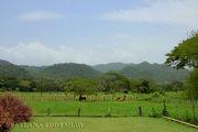 Голубые горы по дороге к Чёрной реке / Ямайка