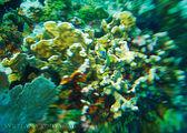 Подводный мир Карибского моря / Ямайка